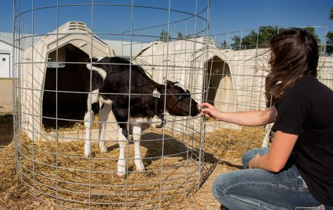 Behind the Scenes: Dairy Research, Training Facility