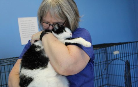 All paws on deck: Humane Society seeks volunteers, donors to help animals