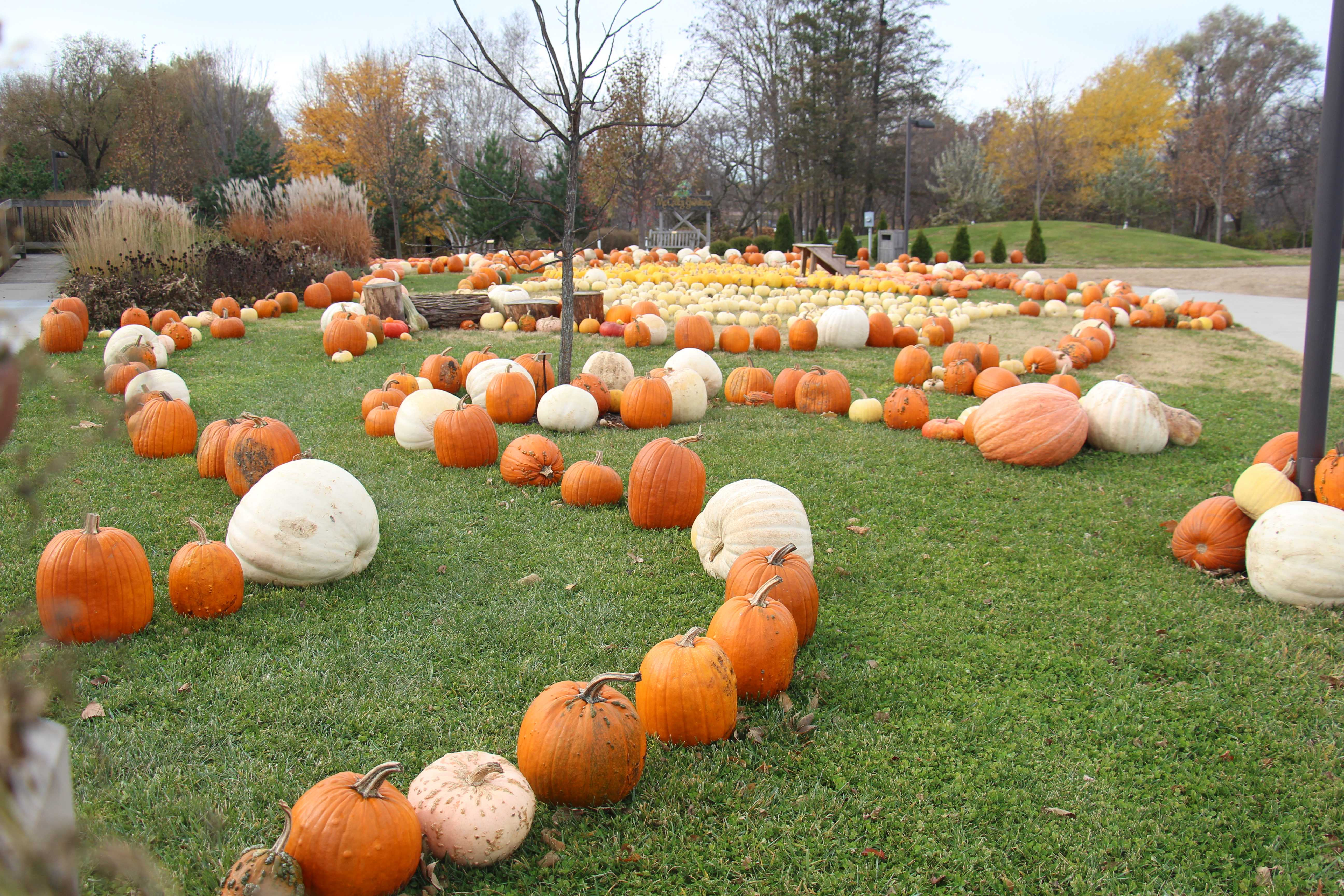 SUBMITTED Some of the 1,900 pumpkins from the Local Foods Education Center on display at McCrory Gardens.